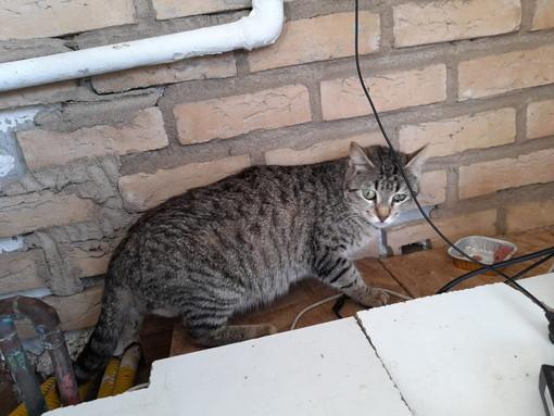 Tra Imperia e Savona molti i salvataggi di gattini abbandonati : l'Accademia Kronos in prima linea (foto)