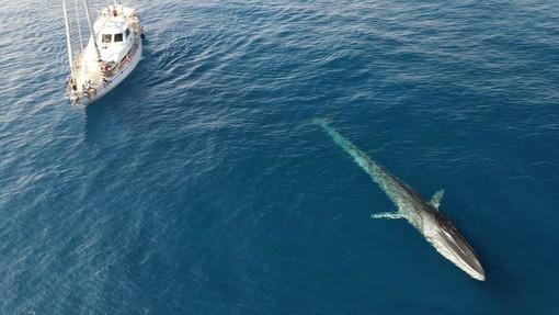 Turismo marino, al via il corso per 'avvistatore di balene': l'iniziativa è organizzato dalla fondazione 'Cima' e dalla Regione