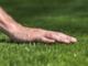 Da Benza puoi realizzare il tuo giardino su misura. L'azienda ha da poco lanciato un nuovo prodotto: il prato sintetico Benza Green
