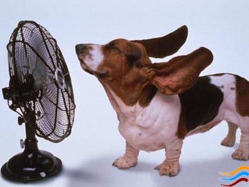 Mamma mia che caldo! Temperatura record a Pontedassio con 36,5 gradi ma al momento ci salva la bassa umidità