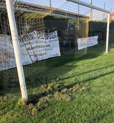 """Cervo: cinghiali invadono il campo sportivo, Denis Muca """"Succede spesso, la vicinanza con il fiume non ci aiuta"""" (Foto)"""