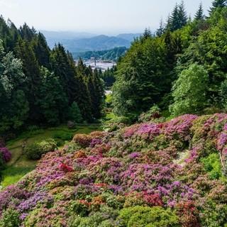 L'Oasi Zegna riparte dalle splendide fioriture spontanee e della Conca dei Rododendri