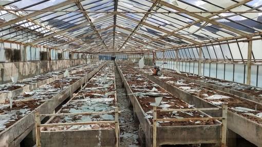 Grandinata in provincia di Imperia, l'annuncio di Mai e Riolfo (Lega): 100 mila euro per smaltire i materiali delle serre danneggiate