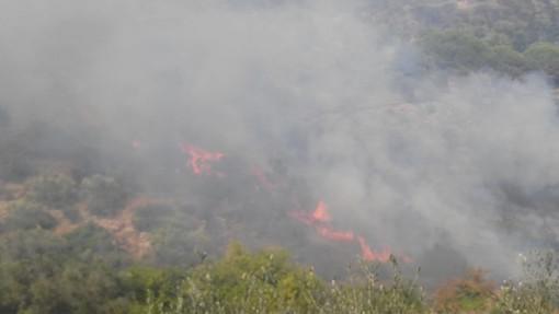 Imperia: devastante incendio sulla collina di Costa d'Oneglia, intervento di Vigili del Fuoco ed elicotteri (Foto e video)