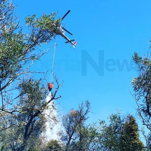 Pietrabruna: incendio di ieri, è bruciato circa un ettaro tra sterpaglie e oliveti. Le foto dell'intervento