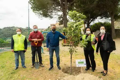 Piantati gli ultimi due alberi a Castellaro e Costarainera: termina il bel progetto del Lions Riva Santo Stefano che ha coinvolto 10 comuni