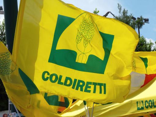 """Grido d'allarme di Coldiretti Liguria per la pesca a strascico: """"Con aumento giornate di fermo e divieti su attrezzature si affossano i pescherecci locali"""""""