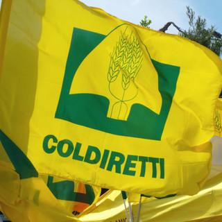 """Covid, Coldiretti: """"Pass vaccinale può salvare turismo estivo"""""""