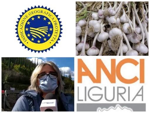 """L'aglio di Vessalico sempre più vicino al marchio Igp. Il sindaco Giliberti: """"Oggi riunione proficua con Anci. L'iter procede per l'importante riconoscimento"""""""