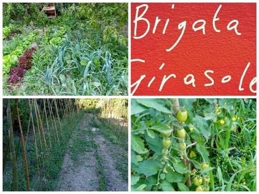 """Imperia, aiutare gli altri attraverso l'agricoltura solidale, la 'Brigata Girasole' avvia il progetto degli orti collettivi: """"Vogliamo produrre cibo, ma anche bellezza"""" (foto)"""