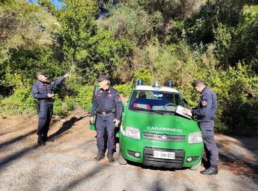 Avevano raccolto senza autorizzazione del verde a Ventimiglia e Dolcedo: tre multe dei Carabinieri Forestali