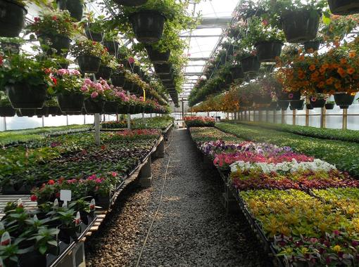 Indagine della Banca del Piemonte: la nostra provincia è la più produttiva per le coltivazioni floricole