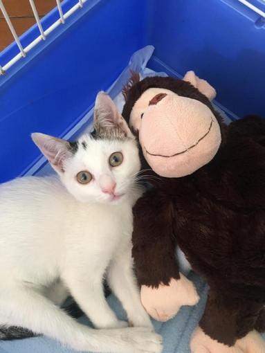 Sanremo: una dolcissima gattina cerca una casetta