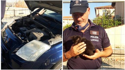Diano Marina: gattino rimane incastrato nel vano motore di un'auto, salvato dalla polizia locale