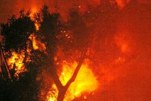 Prelà: incendio spento nel primo pomeriggio bruciata vasta porzione di vegetazione