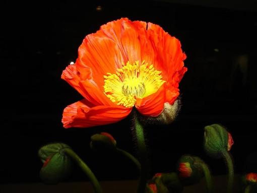 A 'La Forza della Natura' prosegue con successo l'esposizione floricola di Marco Damele