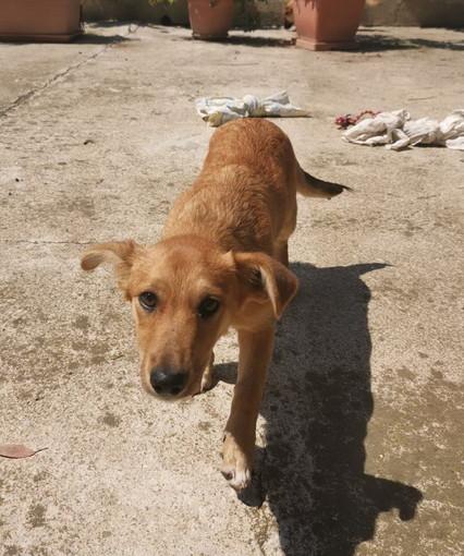 Sanremo: la cagnolina Nikita ha bisogno di avere una famiglia