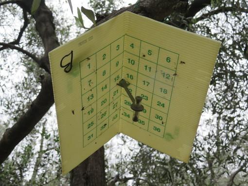 Il progetto 'Olig+' in provincia di Imperia: strategie difensive contro la mosca dell'olivo
