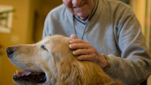 Giornata internazionale diritti animali: Regione Liguria promuove l'adozione consapevole e la Pet Therapy