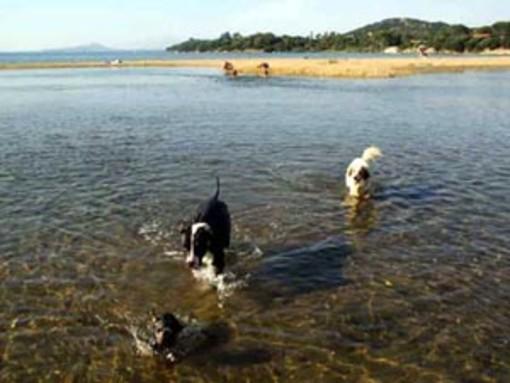 Il Tar sospende l'ordinanza del Sindaco di Diano Marina che vietava i cani sulle spiagge libere dalle 8 alle 20