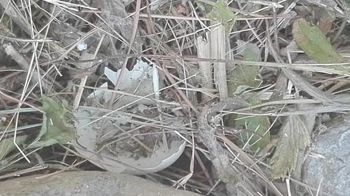 """Diano Marina: pulizia del torrente, gruppo di cittadini chiede più rispetto per l'ambiente """"Sono state distrutte alcune uova"""""""