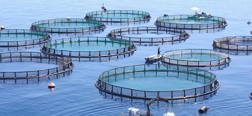 """Imperia: vasche per l'allevamento ittico, Legambiente non osteggia """"a patto che siano realizzate in modo corretto a tutela della salute e dell'ecosistema"""""""