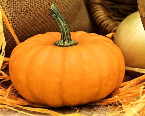 Halloween in casa con le zucche Made in Liguria: dalla padella all'intaglio tutti i segreti per saper riconoscere e preparare il più grande ortaggio del mondo